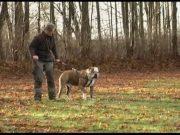Hundens-Ulvesprog-2